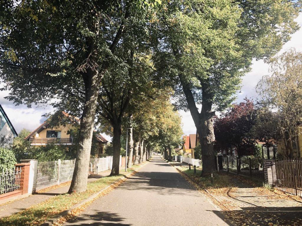 Makler Michendorf: Einfamilienhäuser in der Saarmunder Strasse