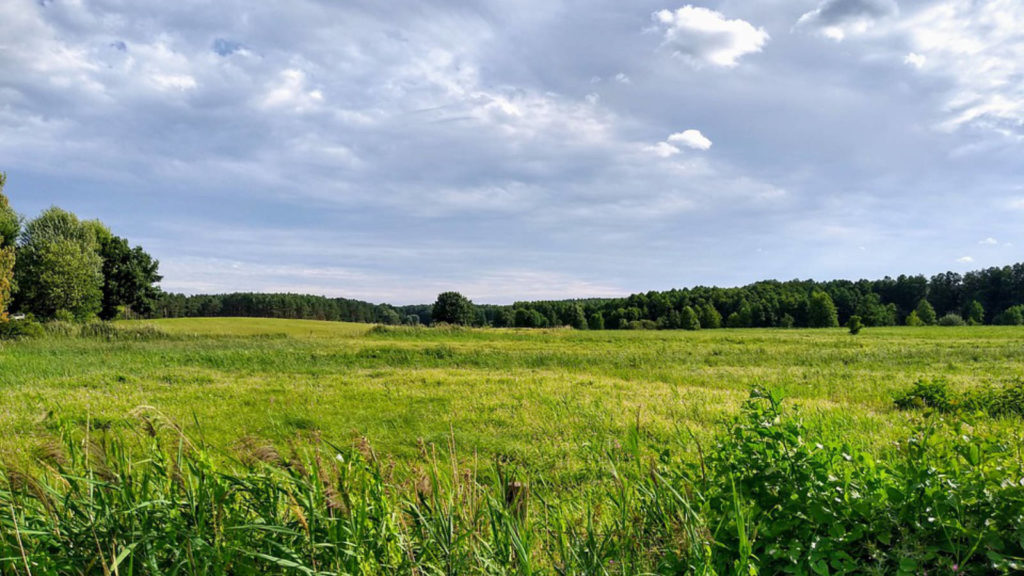Makler in Teupitz: Dahme-Spreewald-Landschaft
