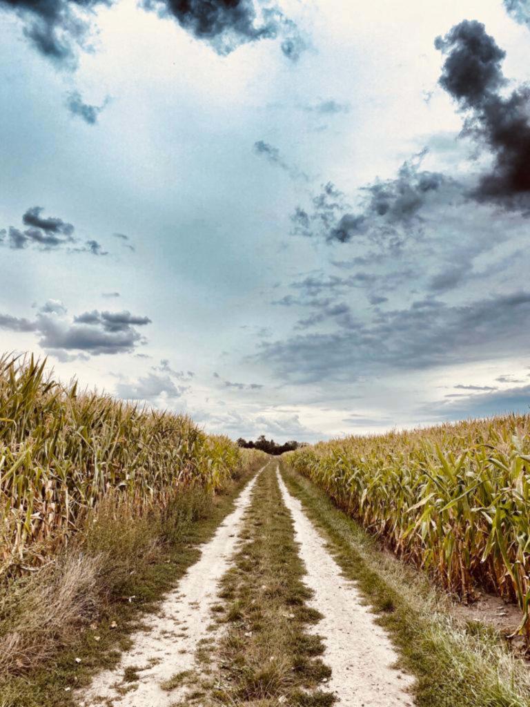 Makler Ketzin: Wanderweg nach Zachow