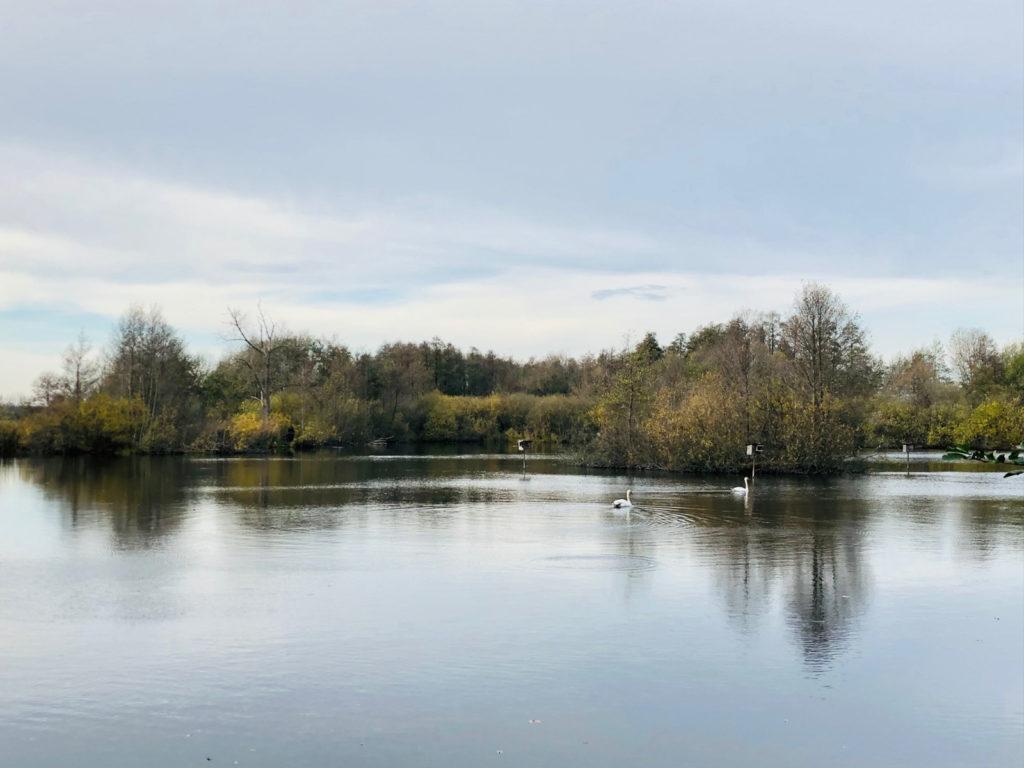 Makler Schenkenberg 14550: Schwäne im Teich