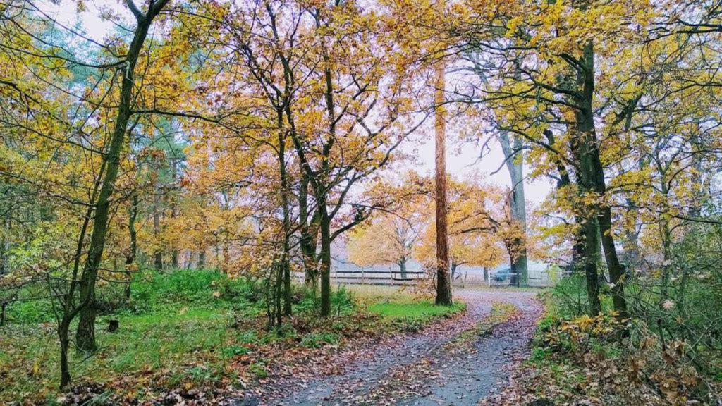 Makler Teltow: Wanderweg am Teltowkanal