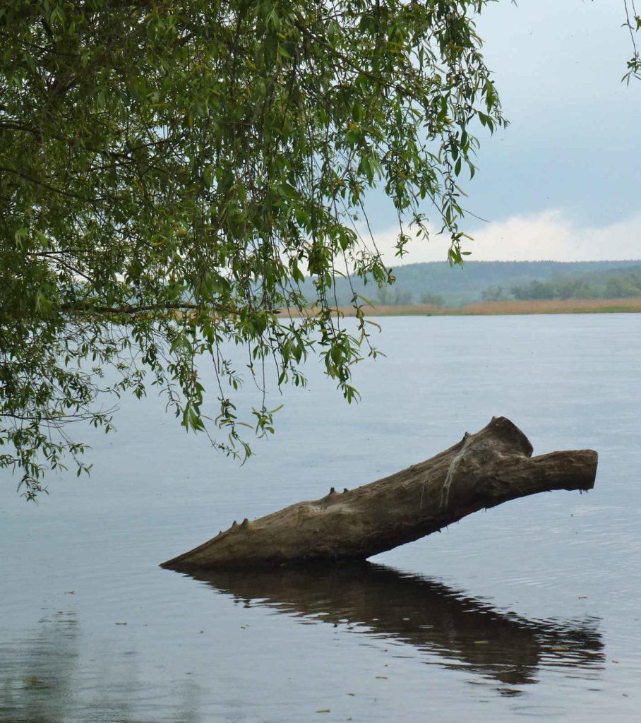 Makler Barnim-Oderbruch, MOL: Landschaft
