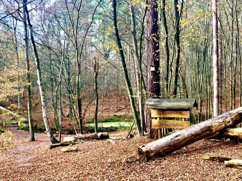 Immobilienmakler Birkenwerder - Naturpark Briesetal