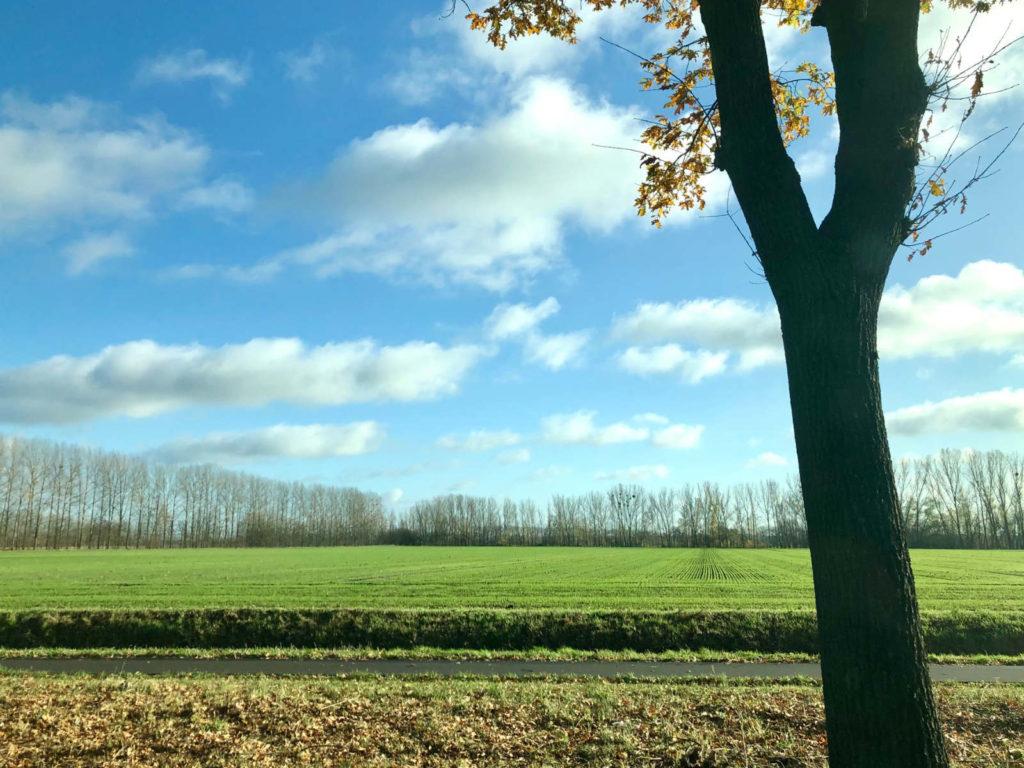 Makler Liebenwalde 16559: Landschaft
