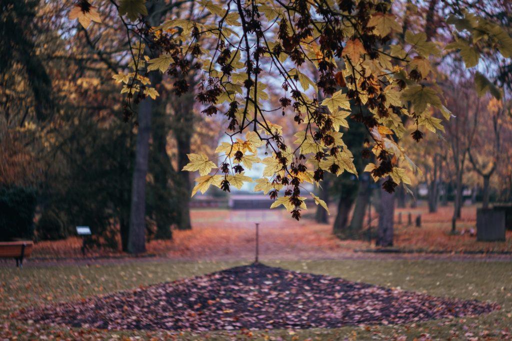 Makler Friedrichsfelde: Friedrichsfelde Zentralfriedhof