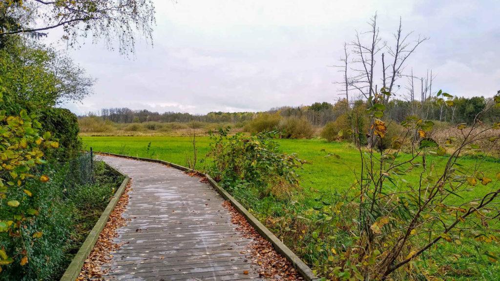 Makler Reinickendorf - Moorwiesen Lübars