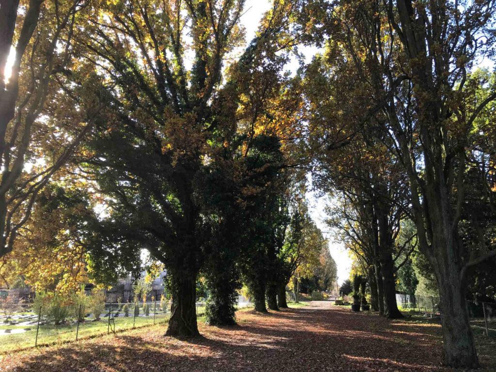 Makler Baumschulenweg: Späthsfelde Park