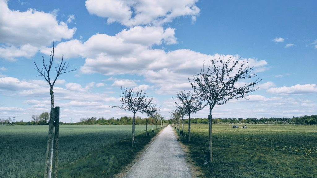 Makler Wartenberg: Feldmark Natur