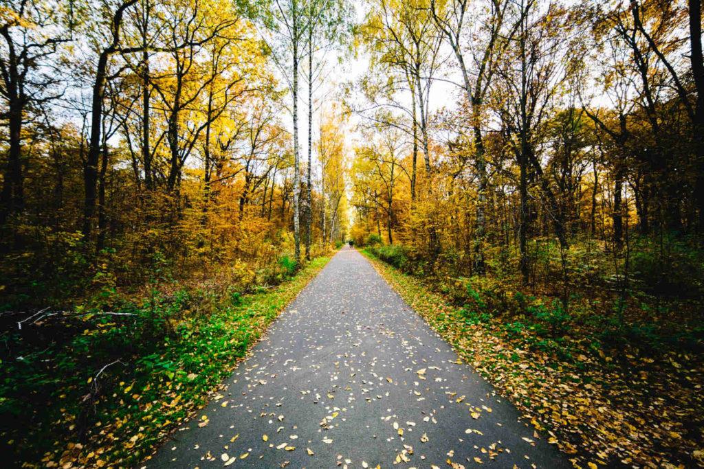 Makler Plänterwald: Forst