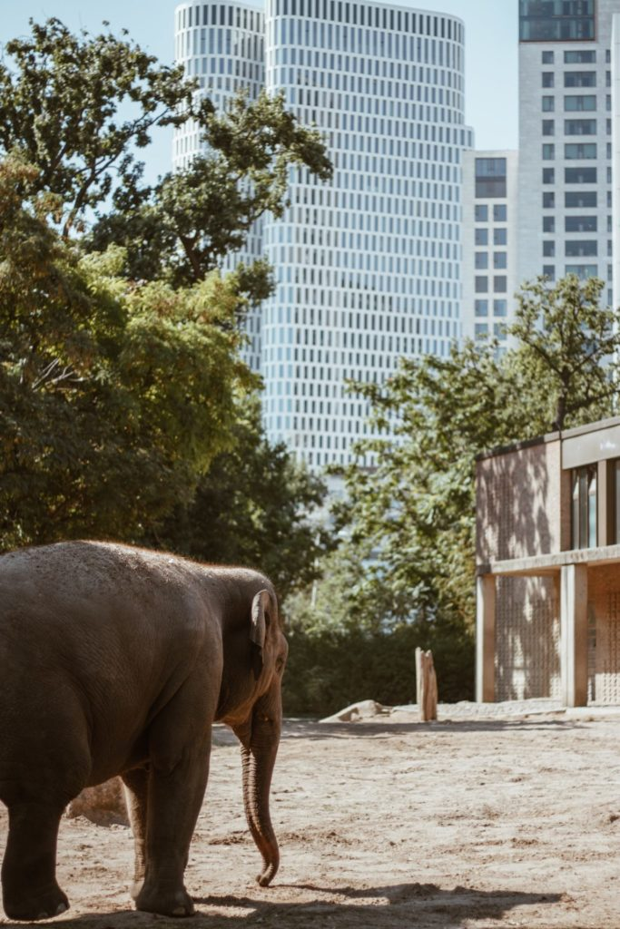 Makler Tiergarten: Der Berliner Zoo