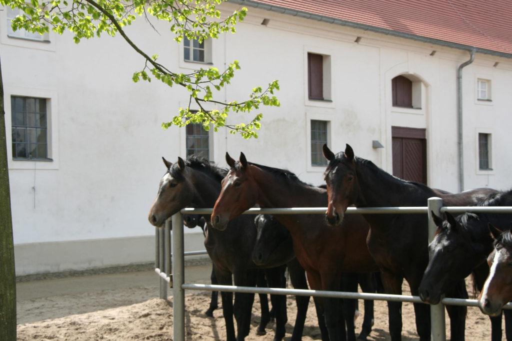 Immobilienmakler Neustadt (Dosse)  - Brandenburgischen Haupt- und Landgestüts